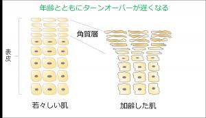 003角質肥厚-若肌vs老化肌