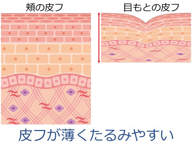 目元の皮膚構造/美キャリアラボ