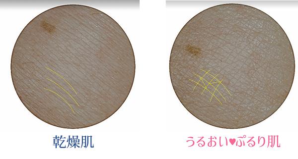 乾燥肌、潤い肌の比較/株式会社美キャリアラボ